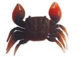 CANGREJO SOFT CRAB T/L ROJO