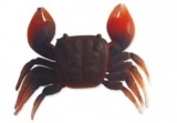 CANGREJO SOFT CRAB T/S